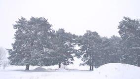 Красивая вьюга дерева природы рождества в ландшафте зимы в последнем вечере в ландшафте снежностей Стоковое Изображение
