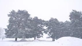 Красивая вьюга дерева природы рождества в ландшафте зимы в последнем вечере в ландшафте снежностей Стоковые Фотографии RF