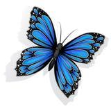 Красивая голубая изолированная бабочка стоковые фотографии rf
