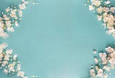 Красивая голубая флористическая предпосылка весны стоковое изображение rf