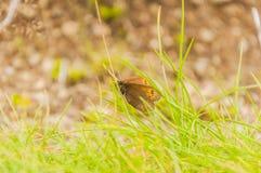 Красивая гора бабочки Стоковые Фотографии RF