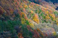 Красивая гора осени стоковая фотография rf