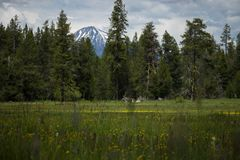 Красивая гора через деревья стоковые фотографии rf