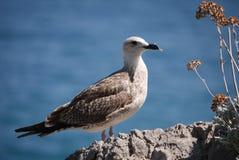 Красивая гордая птица стоит на камне около куста с цветками против голубого моря стоковое изображение