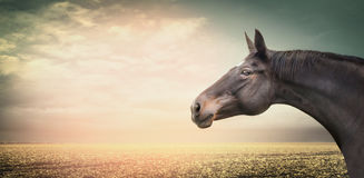 Красивая голова лошади на предпосылке поля осени и небо на заходе солнца освещают Стоковое Изображение