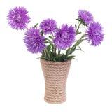 Красивая голубая астра цветет в вазе стоковые фото