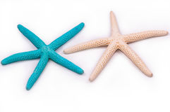 Красивая голубая и белая морская звезда, изолированная рыба звезды Стоковое фото RF