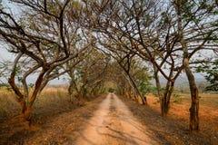 Красивая грязная улица с тоннелем деревьев и исчезая пункта Стоковые Изображения RF