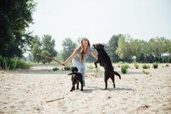 Красивая девушка играет с коричневыми labradors Стоковое Изображение RF