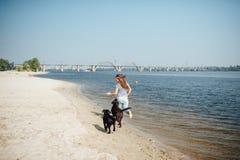 Красивая девушка играет с коричневыми labradors Стоковая Фотография