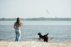 Красивая девушка играет с коричневыми labradors Стоковая Фотография RF