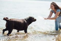 Красивая девушка играет с коричневыми labradors Стоковые Фотографии RF