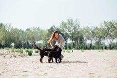Красивая девушка играет с коричневыми labradors Стоковое Изображение