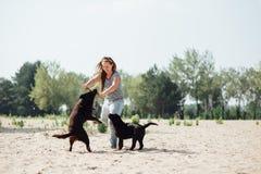 Красивая девушка играет с коричневыми labradors Стоковые Фото
