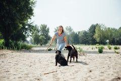 Красивая девушка играет с коричневым labradorsn Стоковая Фотография RF
