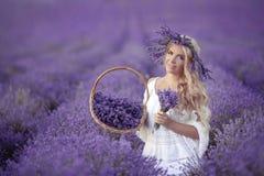 Красивая девушка на фиолетовой лаванде хранила в Valensole Провансаль, стоковая фотография rf