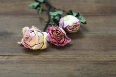 Красивая деревянная предпосылка с высушенными розовыми розами стоковые фото