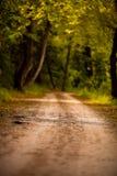 Красивая дорога в лесе с цветами осени стоковые фотографии rf