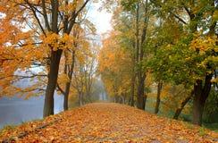 Красивая дорога осени в парке Стоковые Изображения RF