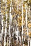 Красивая древесина осени стоковые фотографии rf