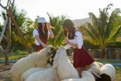 Красивая девушка на ферме овец Стоковые Фото