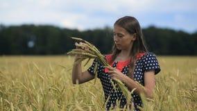 Красивая девушка подростка с ушами пшеницы в пшеничном поле видеоматериал