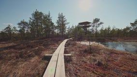 Красивая деревянная дорога на болоте сток-видео