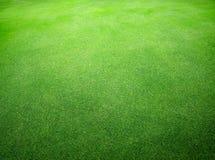 Красивая естественная текстура зеленой травы Стоковые Фотографии RF