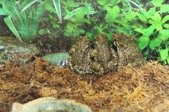 Красивая жаба Стоковое Изображение