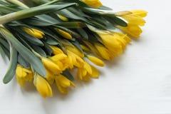 Красивая желтая весна цветет крокус Стоковая Фотография RF