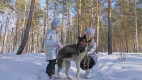 Красивая женщина и малый ребенок идя в лес зимы с осиплой собакой Счастливая молодая мать с дочерью в сток-видео