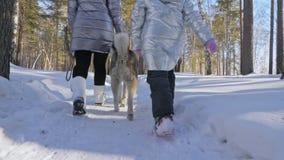 Красивая женщина и малый ребенок идя в лес зимы с осиплой собакой Счастливая молодая мать с дочерью в акции видеоматериалы