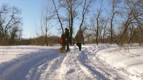 Красивая женщина с детьми и собака идут в парк на Рождество зимы солнечное сток-видео