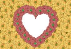 Красивая желтая предпосылка цветка маргаритки и красный цветок маргаритки сделали форму сердца Стоковая Фотография RF