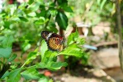 Красивая живая бабочка в саде стоковые фотографии rf