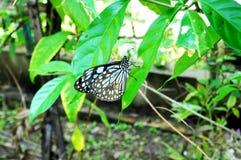Красивая живая бабочка в саде стоковая фотография