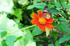 Красивая живая бабочка в саде стоковое изображение
