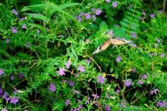 Красивая живая бабочка в саде стоковое изображение rf