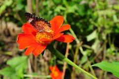 Красивая живая бабочка в саде стоковая фотография rf