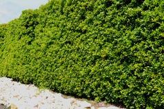 Красивая загородка дерева, зеленое поле и камень с голубым небом и clo Стоковая Фотография RF