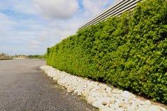 Красивая загородка дерева, зеленое поле и камень с голубым небом и clo Стоковые Изображения