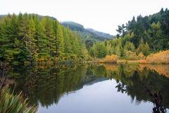 Красивая запруда серых цветов, Новая Зеландия стоковая фотография