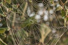 Красивая, затейливая сеть паука Стоковая Фотография RF