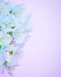 Красивая зацветая граница цветков Стоковые Изображения