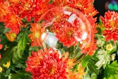 Красивая зацветая маргаритка стоковые изображения