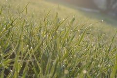 Красивая зеленая зона в плоскости  стоковая фотография rf