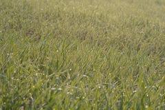 Красивая зеленая зона в плоскости  стоковые фото