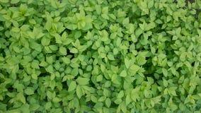 Красивая зеленая трава сверху стоковые фото