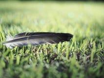 Красивая земля травы руки пера запачкала абстрактное искусство предпосылки bokeh для обоев Стоковое фото RF