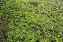 Красивая зеленая предпосылка мха конец вверх Картина Земля покрыта с мхом Стоковые Изображения RF